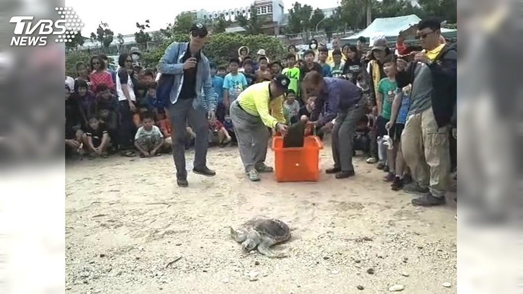 圖/中央社 小海龜魚線繞頸7個月治療 百人護送返海洋