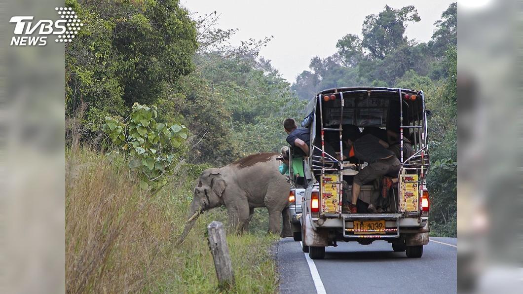 圖/達志影像美聯社 不爽被追撞 大象暴怒連車帶人「踩好踩滿」