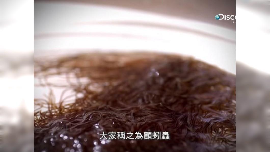 生物專家推測異形是由「顫蚓蟲」組成。圖/翻攝自YouTube「 Discovery Channel Taiwan」
