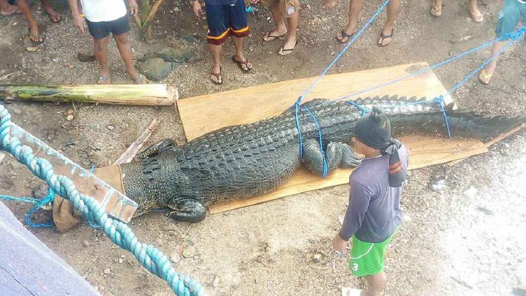圖/翻攝自Rizzie Ancheta臉書 可能剛吃過人! 菲律賓捕獲4.75米巨鱷