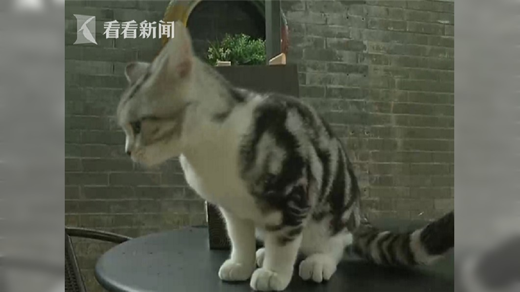 圖/翻攝自看看新聞 網購寵物貓..半個月後 一家人全染上骯髒皮膚病