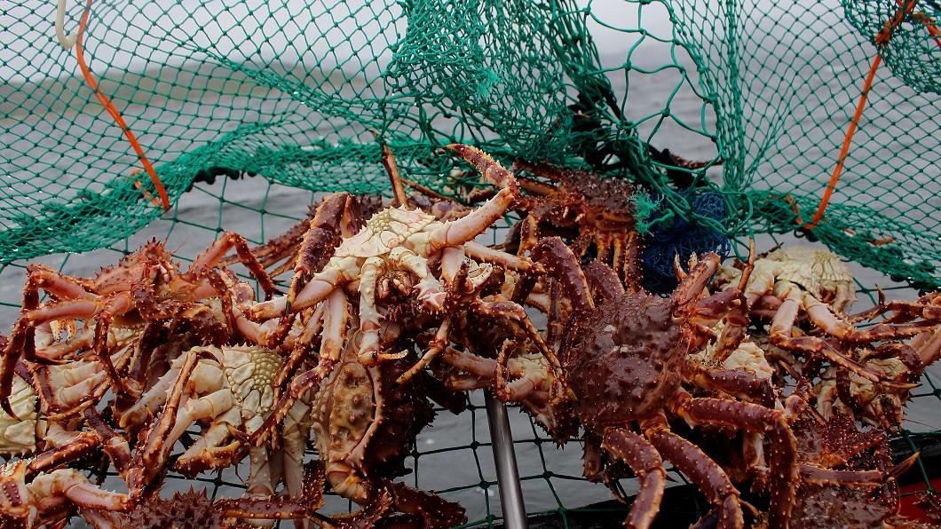 示意圖/TVBS 南韓松葉蟹生吃最美味 雪花蟹腳賣相滿分