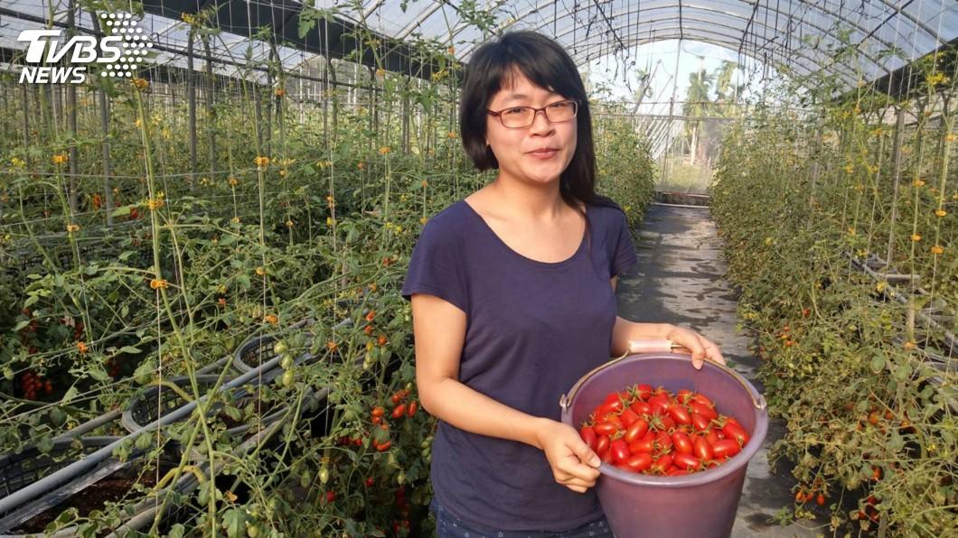 圖/中央社 日本學漫畫返台當青農 她返鄉種玉女小蕃茄