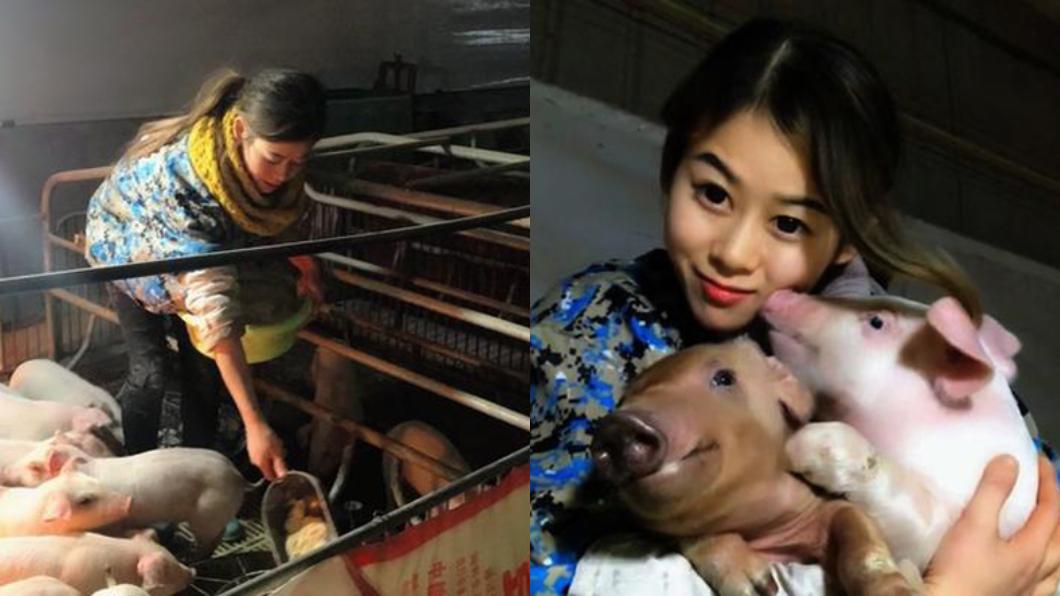 圖/翻攝自微博 睡豬圈「人工呼吸救400豬」 27歲正妹年收455萬