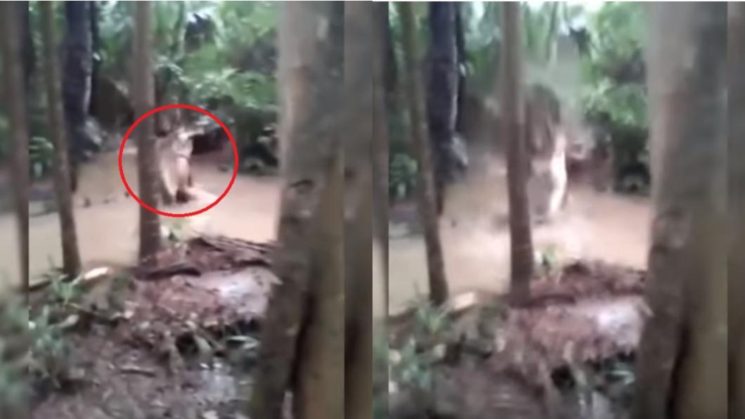 圖/翻攝自YouTube 巨鱷啃食小學生「咬屍猛甩砸水潭」 目睹群眾驚聲尖叫