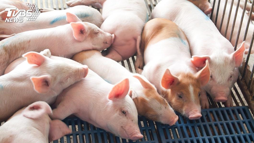 大陸最近因為非洲豬瘟疫情嚴重,不少人因此不敢吃豬肉。(示意圖/TVBS) 漢堡肉一粒一粒…還流出橘色汁 他密集恐懼症食慾全消