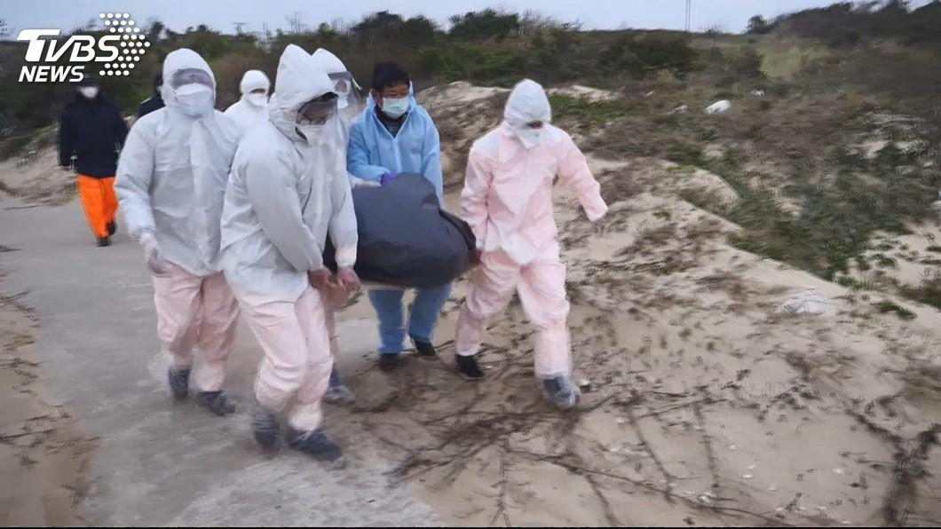 圖/TVBS 金門海邊死豬確認非洲豬瘟 海陸空防堵漏洞