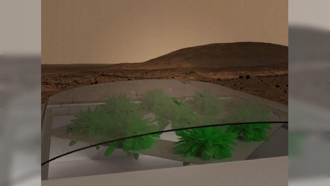 圖/翻攝自Lettuce On Mars