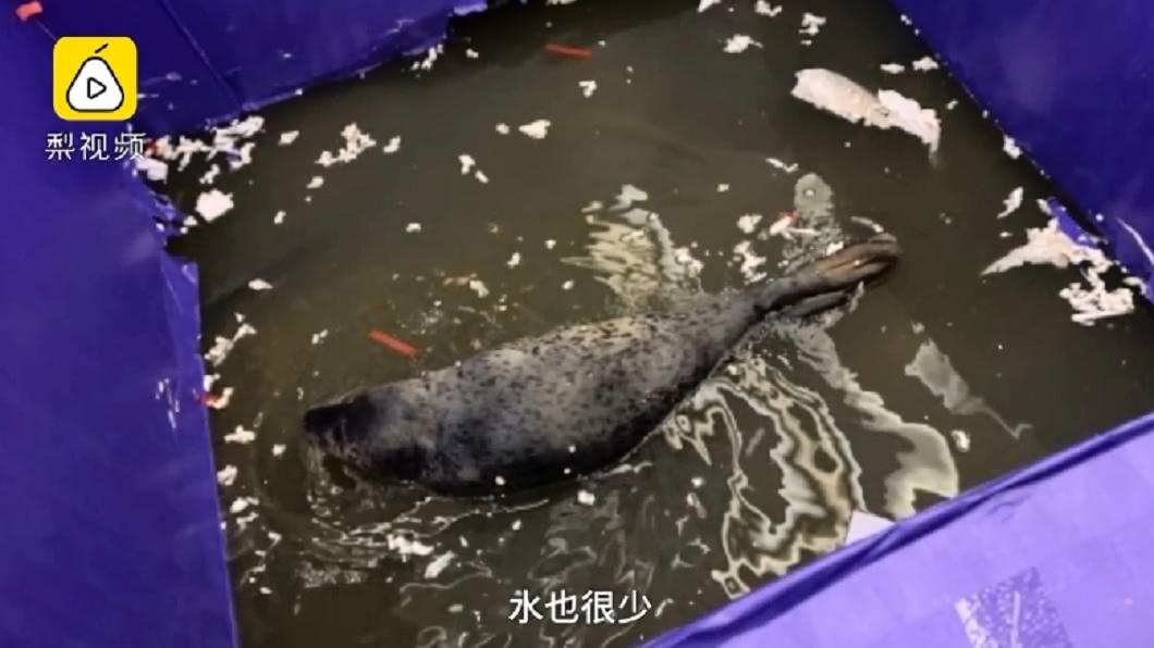 大陸一間商場用小海豹當活動吉祥物,但卻被投訴環境不佳引發爭議。圖/翻攝自梨視頻