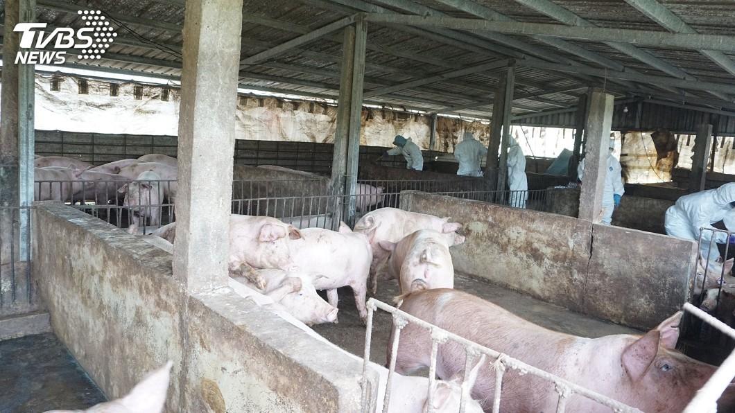 圖/中央社 賴揆指示強化非洲豬瘟防疫 籲大陸公開疫情