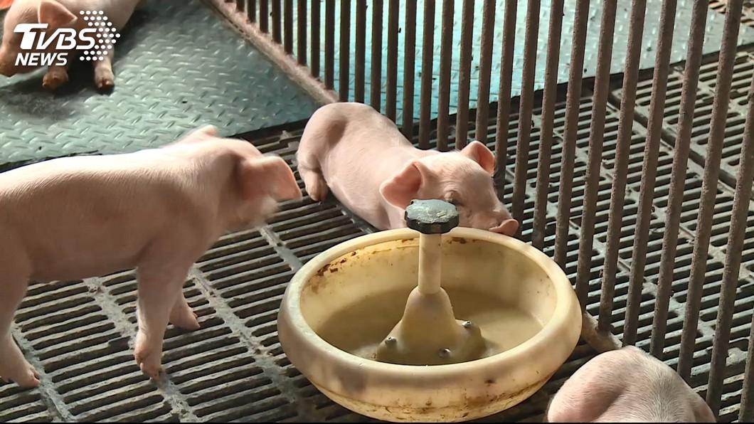圖/TVBS 農委會:582場廚餘養豬須徹查 否則防疫漏洞開