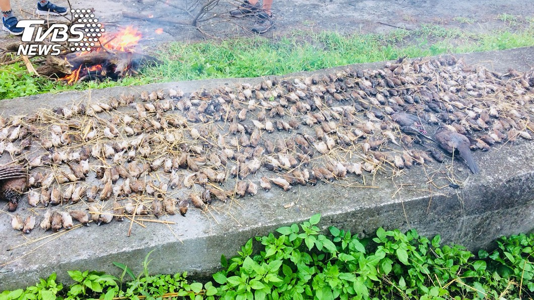 圖/中央社 台東農田逾千隻鳥屍 驗出「毒性最強」農藥殘留