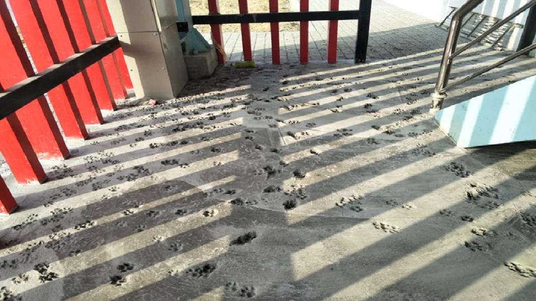 依照地面的足跡顯示,推測應該是浪浪趁半夜時間來的。(圖/翻攝自爆廢公社)