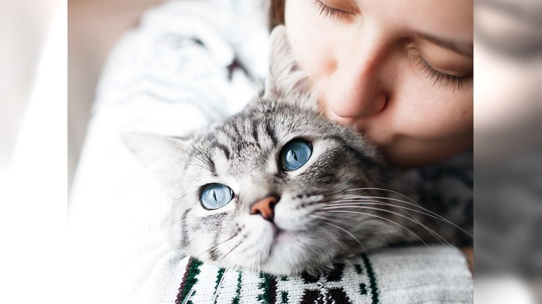 圖/shutterstock 「吸貓」到底是什麼?貓奴最懂的10大用語來了