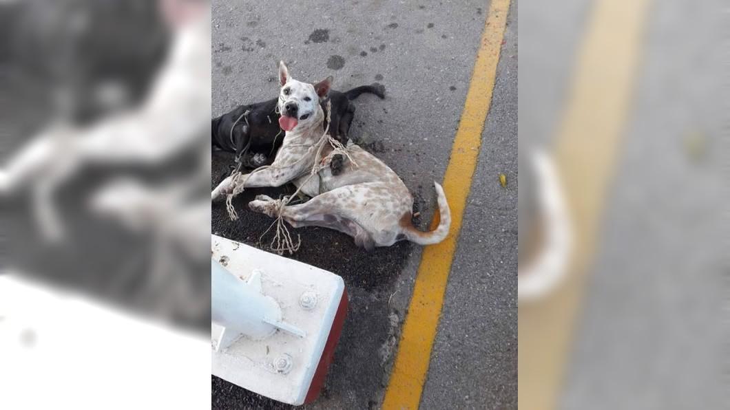 2隻狗在7小時高溫曝曬下險些喪命。圖/翻攝自臉書「WATCHDOG THAILAND」