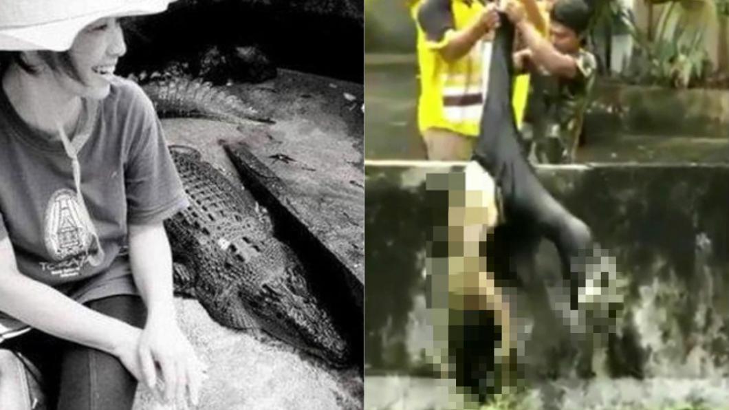 圖/翻攝自推特 餵養5米鱷魚15年 她失足「半個身體遭啃爛」