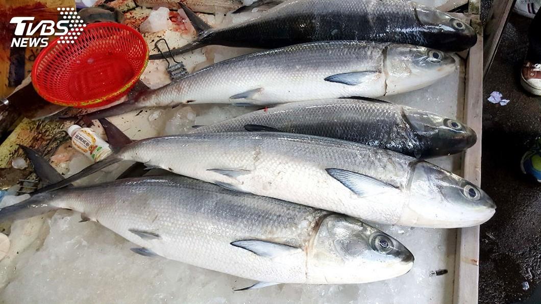 圖/中央社 澎湖海上捕獲超大虱目魚 比養殖大10倍
