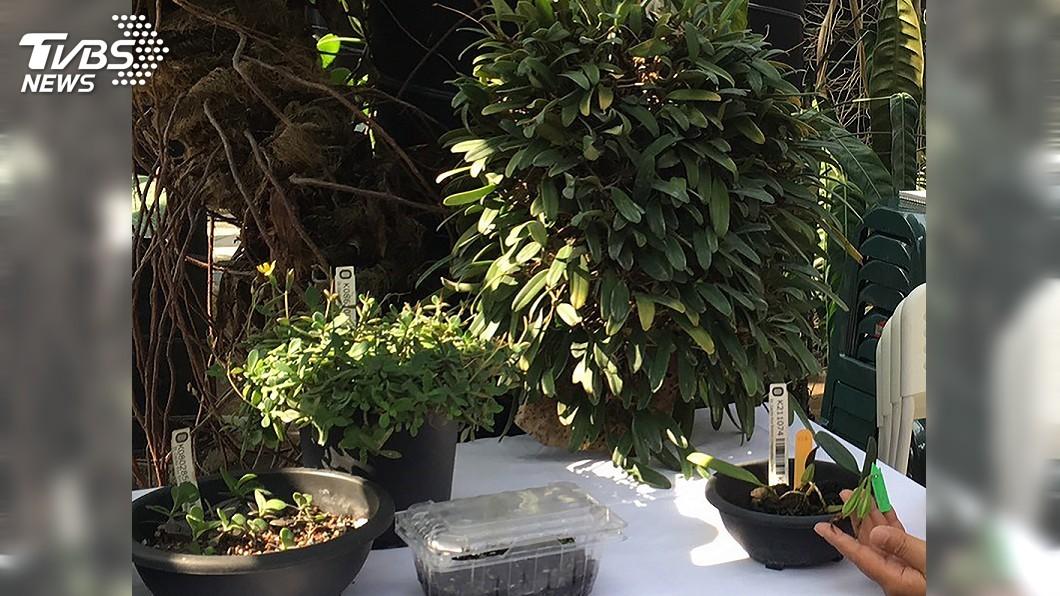圖/中央社 守護瀕危植物 植物保種中心與屏縣府簽約