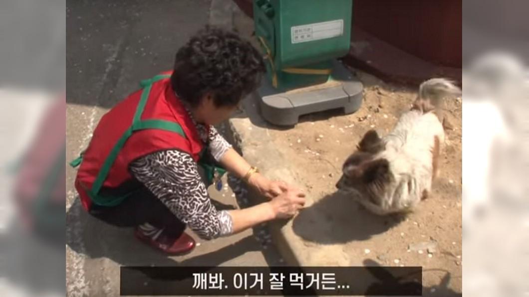 居民平時會提供食物和水。圖/翻攝自YouTube,SBS TV동물농장x애니멀봐