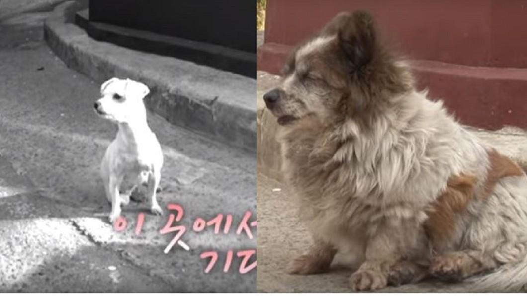 韓國忠犬苦等10年,從幼犬變成老狗。合成圖/YouTube,SBS TV동물농장x애니멀봐 「在這等著」忠犬不知遭棄養...原地守約10年