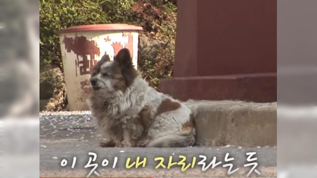 圖/翻攝自YouTube,SBS TV동물농장x애니멀봐