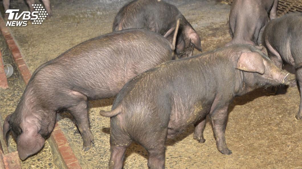 圖/中央社 提前至31日截止 雲縣32家申請飼料養豬補助