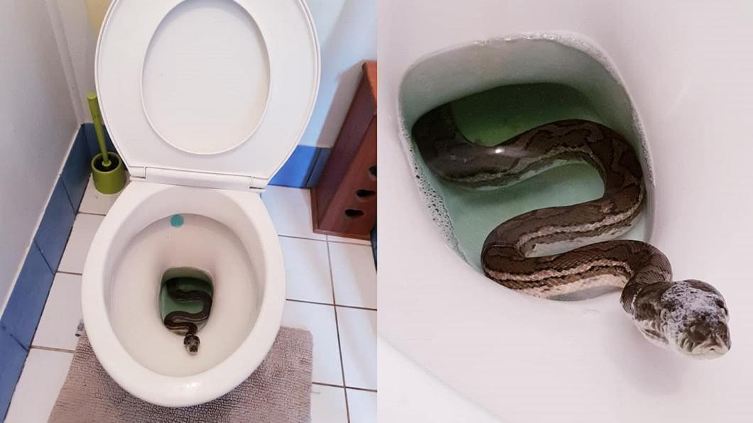 圖/翻攝自 Brisbane Snake Catchers 臉書