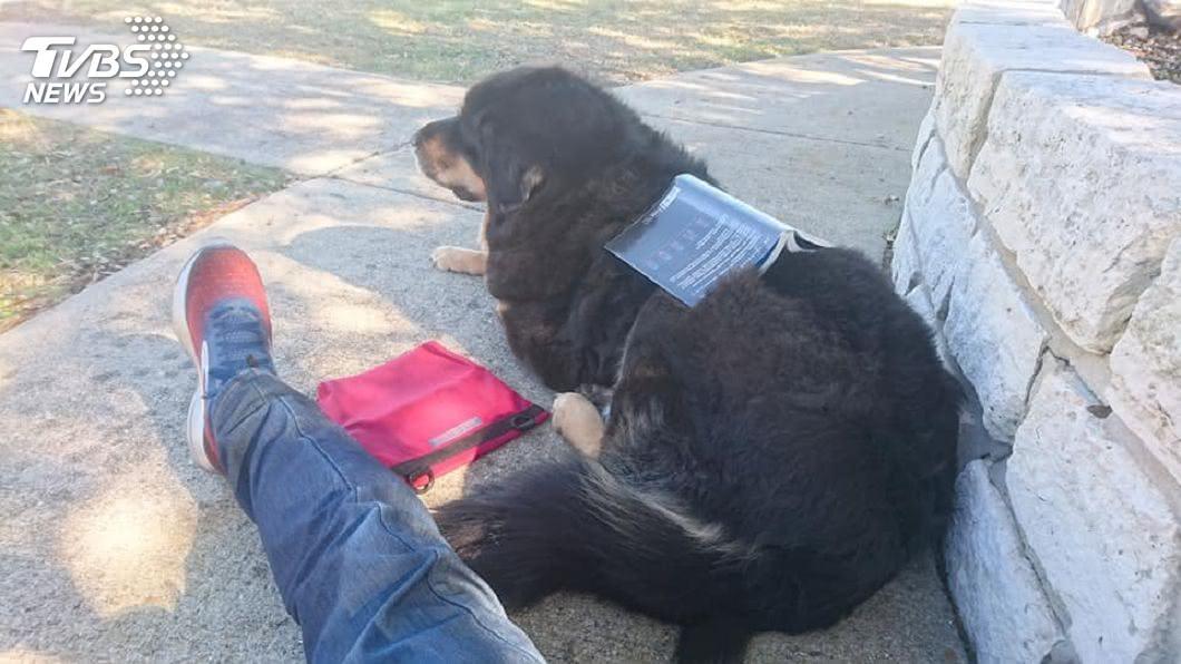 圖/TVBS 這不是幼稚! 大學研究:常跟寵物講話的人智商高
