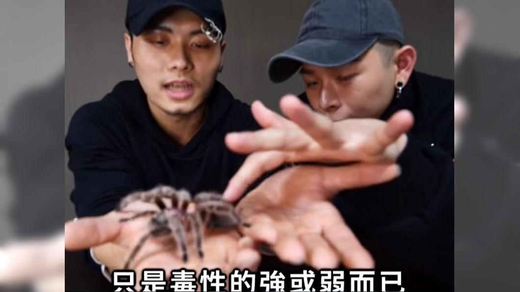 知名YouTuber挑戰把蜘蛛放進嘴裡。圖/YouTube 足以毒死1隻鳥!傻男「含住」大蜘蛛 下秒吐血水