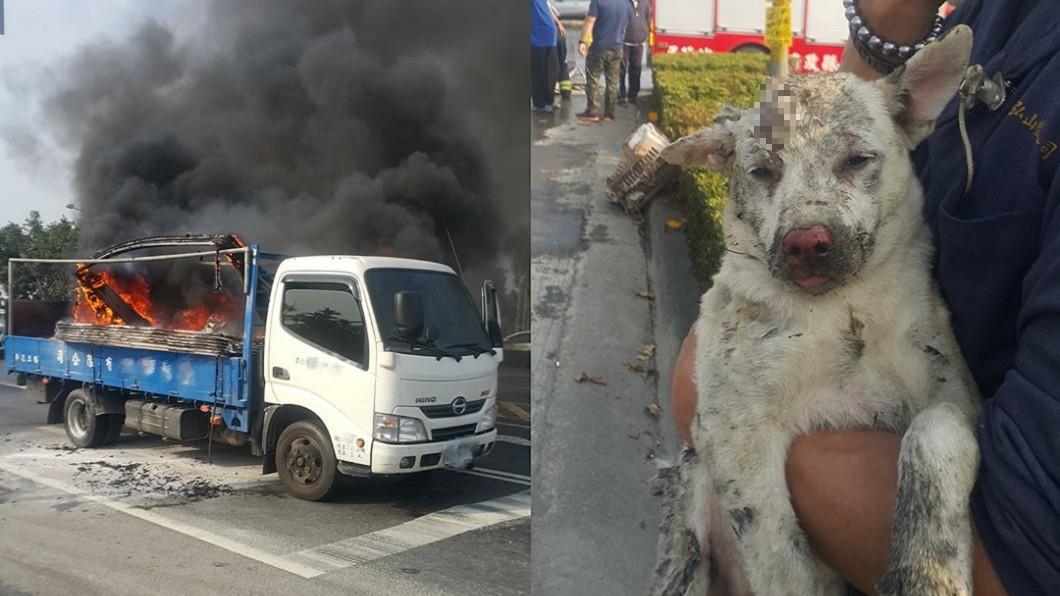 屏東潮州日前發生火燒車事故,兩隻待領養的流浪犬被燙傷。圖/爆料公社 屏東火燒車流浪犬燙傷 車主求警:先去獸醫院再回來