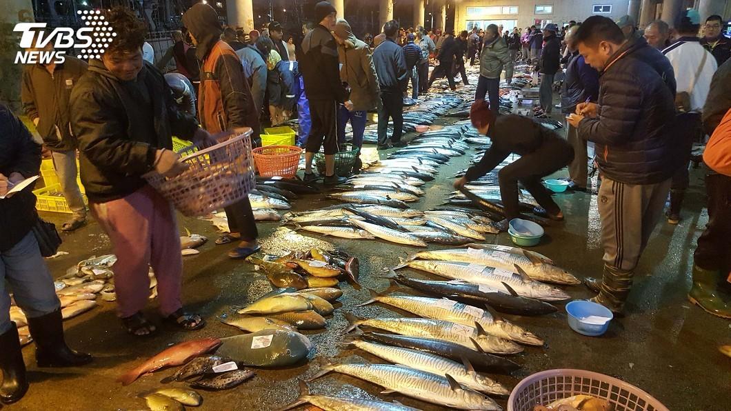 圖/中央社 貨出去發大財!馬公漁市場物阜漁豐 漁民過好年