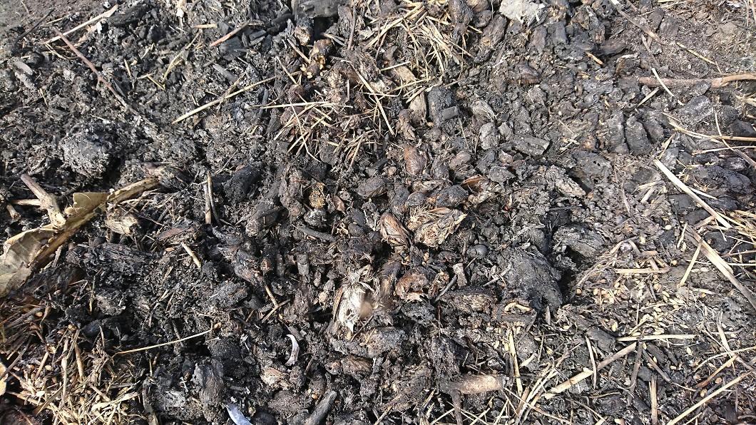 圖/民眾提供 花蓮壽豐鄉發現豬屍 防疫所開挖臟器送驗
