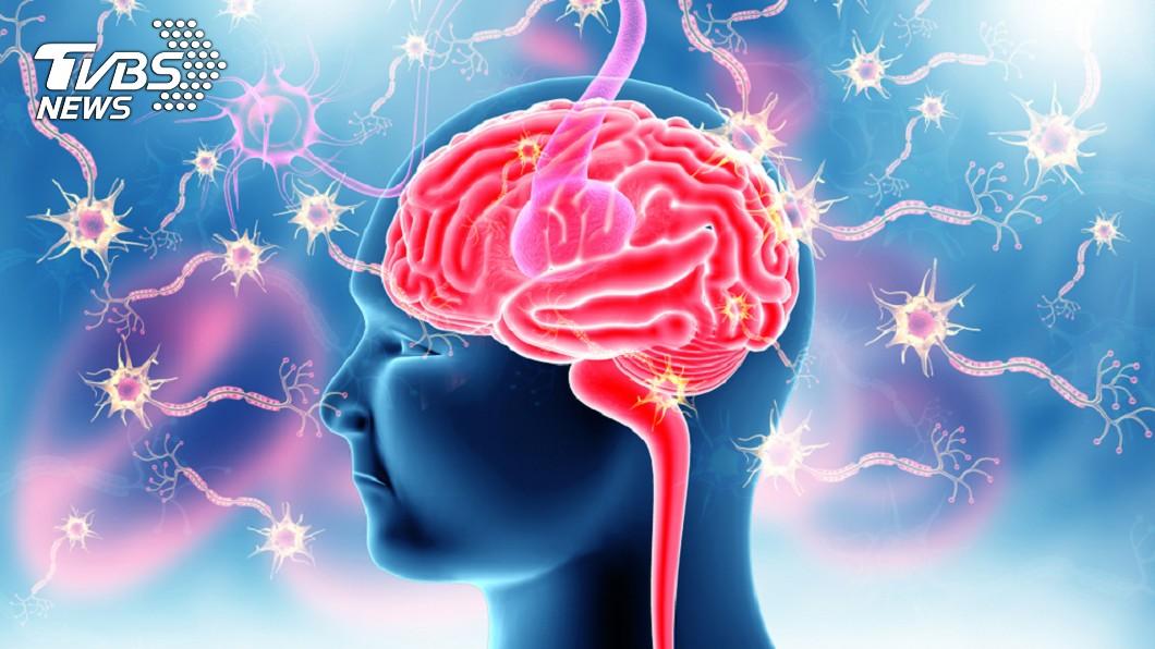 示意圖/TVBS 揭女性比男性長壽背原因 與大腦年齡有關?
