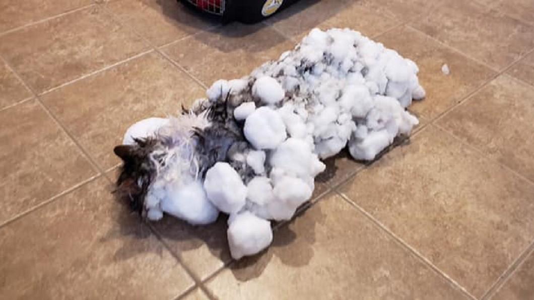 圖/翻攝自Animal Clinic of Kalispell臉書 真有9條命?小貓困雪堆「變冰棒」 7天後奇蹟復活