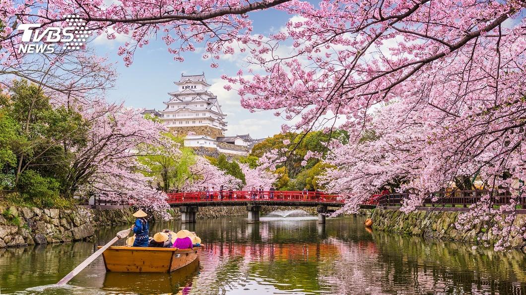 圖/shutterstock達志影像 東京櫻花盛開 比往年早12天
