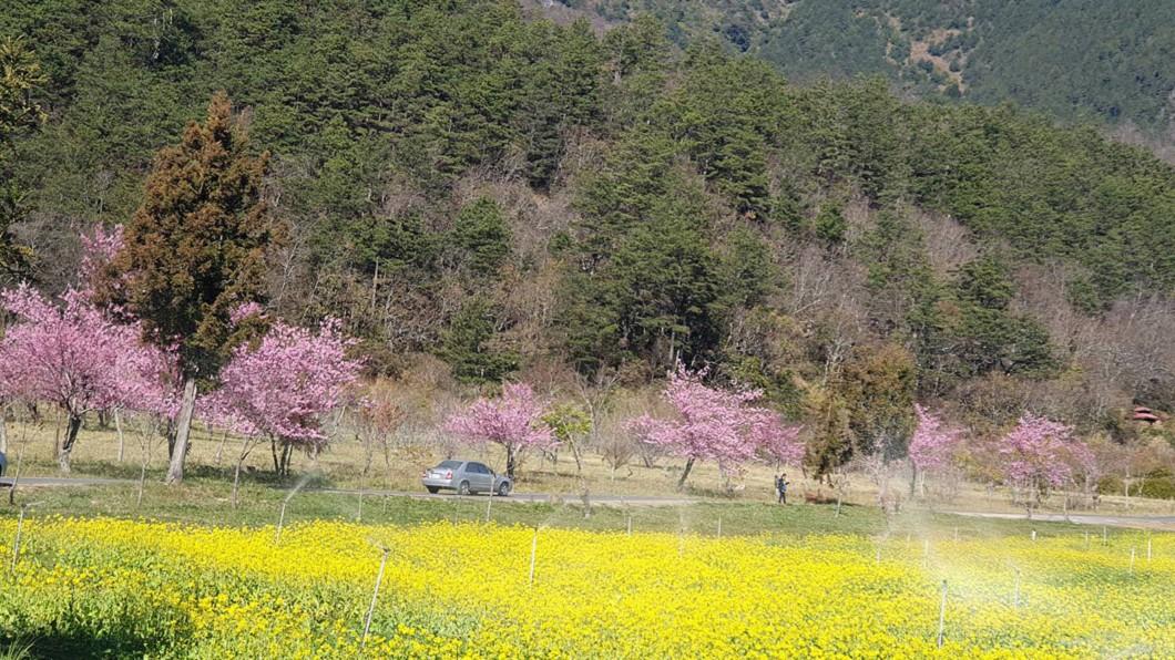 圖/武陵農場提供
