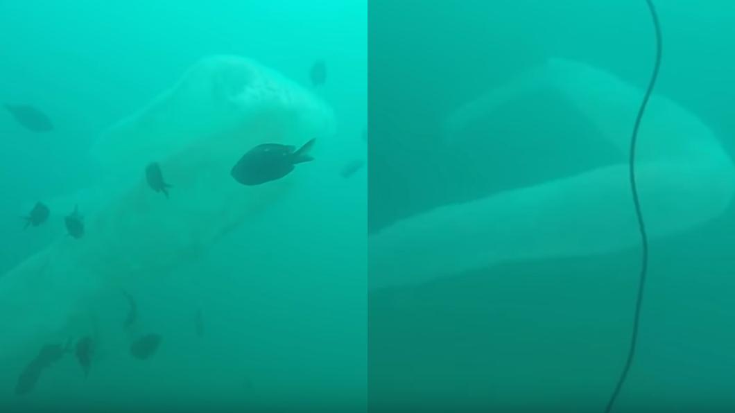 圖/翻攝自YouTube 海中驚見「9米異形」 潛水客看傻:像巨型保險套…