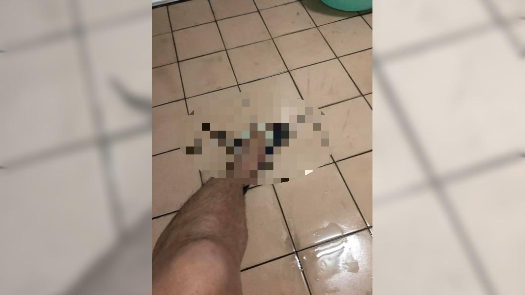 圖/陳姓網友授權使用 黃金左腿在這!他拉屎遇鼠下一秒這樣做 功力被讚爆…