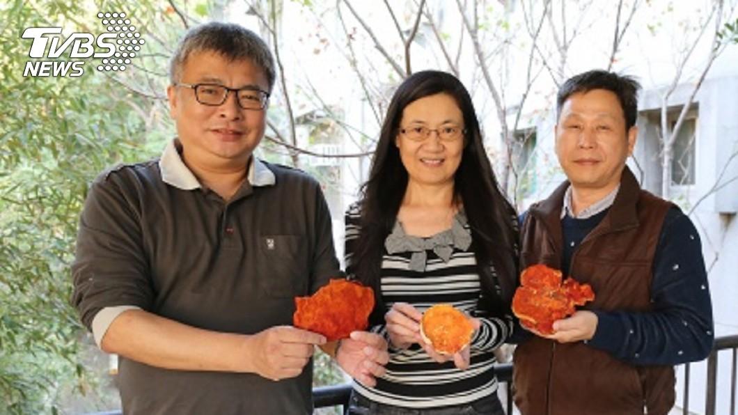 中興大學研究團隊發現牛樟芝中的「樟芝酸A」能抑制乳線癌腫瘤發生。圖/中央社 抗全球第二大癌!台灣研究成功 「這個」讓腫瘤小10倍