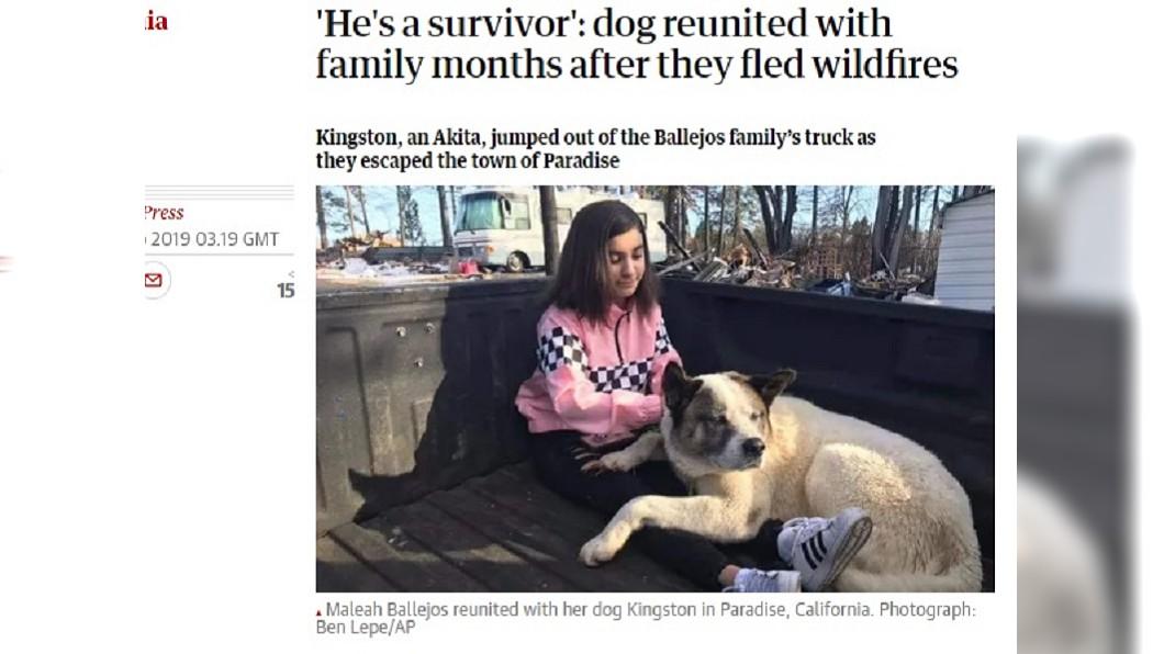 圖/翻攝自The Guardian 逃離野火與主人失散 離家101天後終回家人懷抱