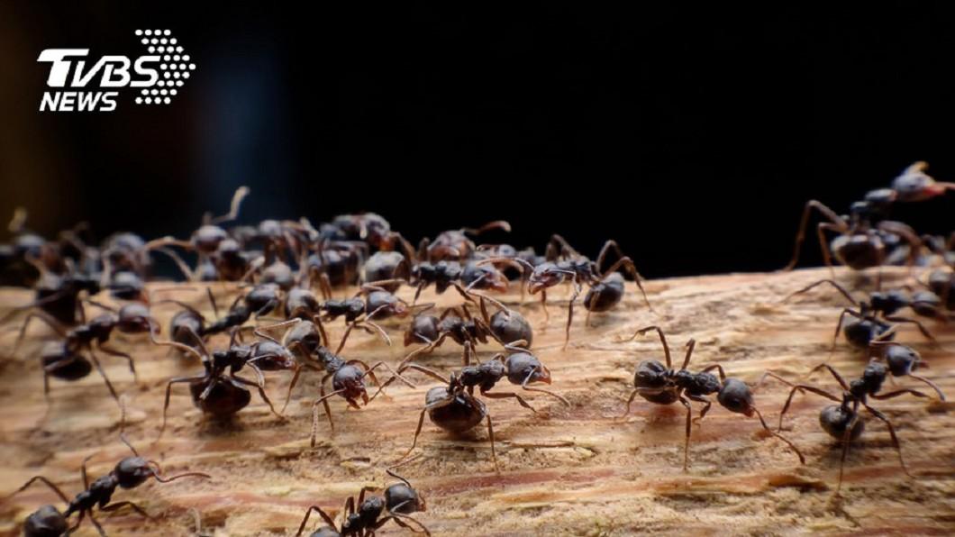 示意圖。圖/TVBS 男子網路販賣「活螞蟻」賺3萬 遭判刑3個月