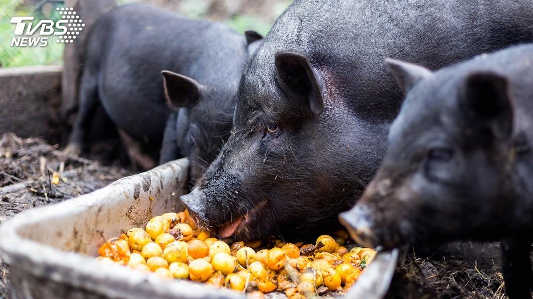 示意圖/TVBS 越南養殖豬逾2815萬頭 主要出口到大陸