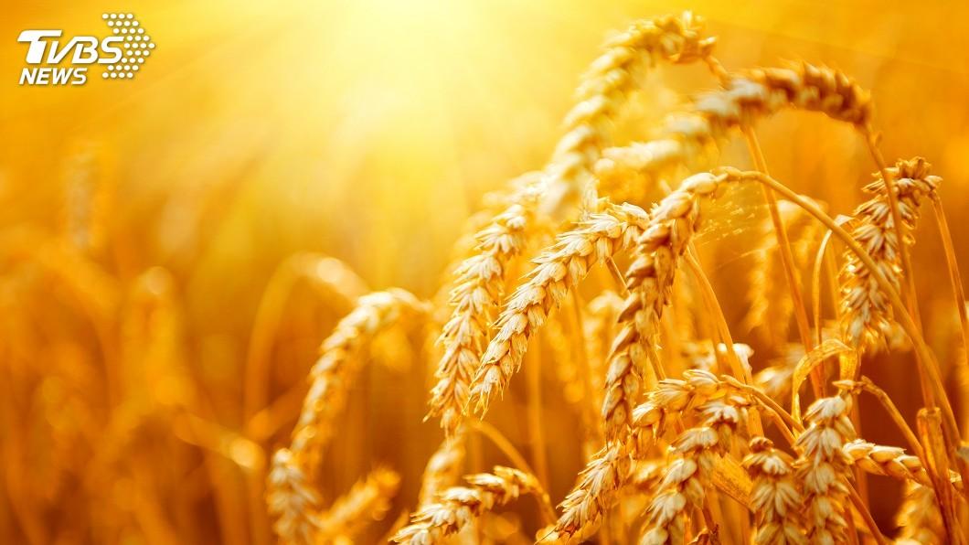 示意圖/TVBS 美中準備貿易復談 中方下週將訪美農業帶