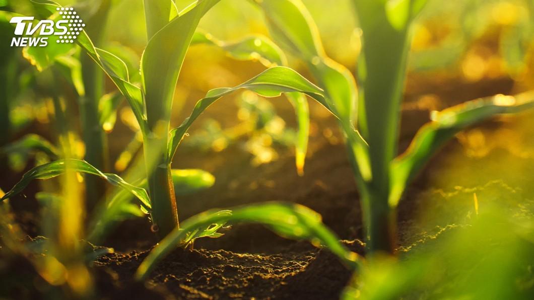 示意圖/TVBS 氣候變遷造成生物多樣性流失 糧食供應受威脅