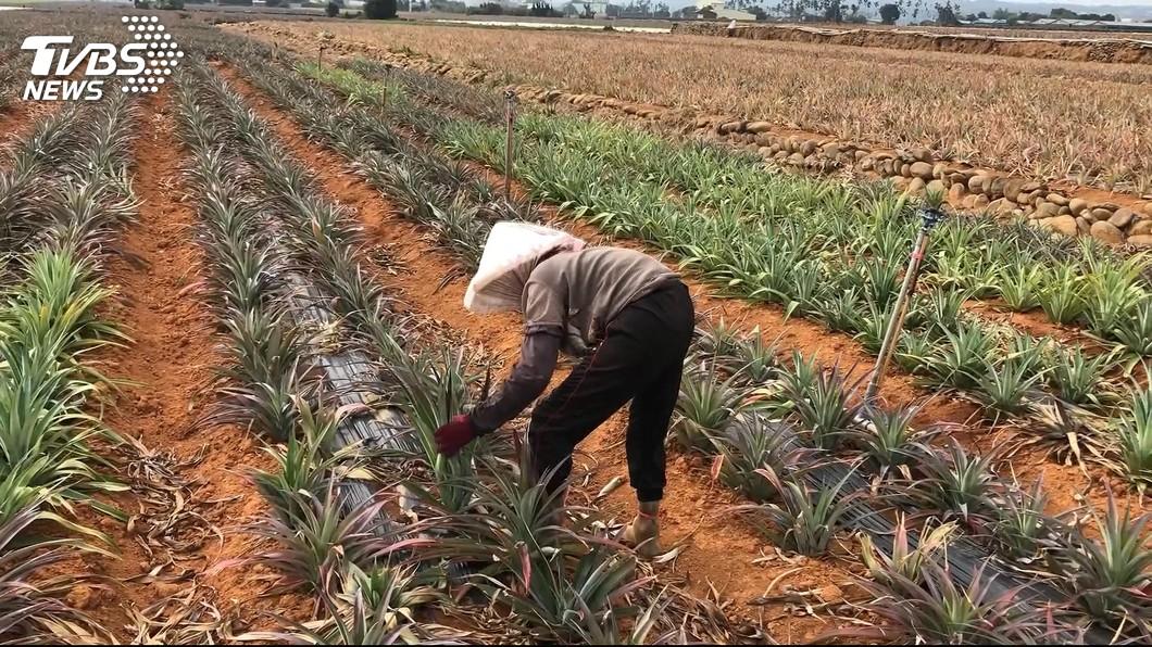 圖/TVBS 老農津貼109年起調到7550元 約58.6萬人受惠