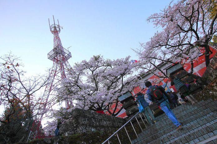 亞洲櫻花季景點-阿里山櫻花季。圖/翻攝自Tripbaa趣吧!亞洲自由行專家