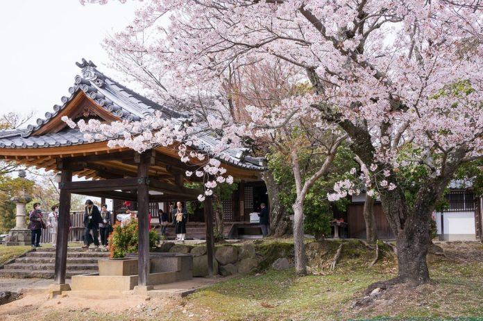 亞洲櫻花季景點-日本京都清水寺。圖/翻攝自Tripbaa趣吧!亞洲自由行專家
