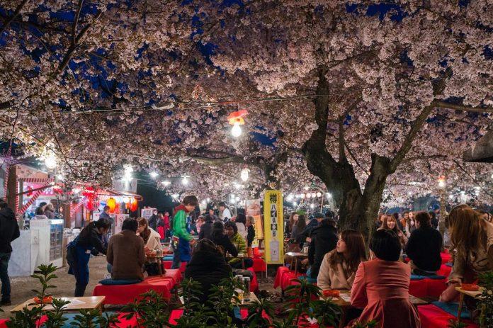亞洲櫻花季景點-日本札幌圓山公園。圖/翻攝自Tripbaa趣吧!亞洲自由行專家