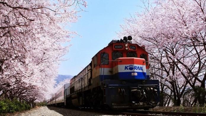 亞洲櫻花季景點-鎮海慶和火車站。圖/翻攝自Tripbaa趣吧!亞洲自由行專家
