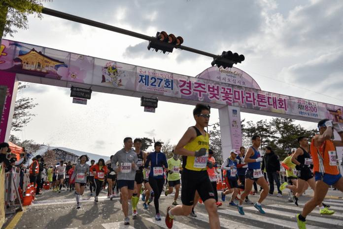 亞洲櫻花季景點-慶州櫻花馬拉松。圖/翻攝自Tripbaa趣吧!亞洲自由行專家